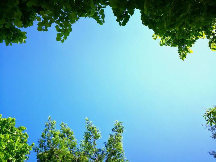 Trees Nature