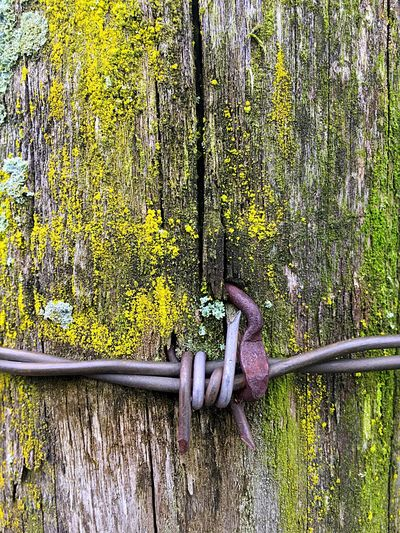 Outdoors Metal Wood Wire Fence Post Wood - Material Green Moss Close-up Barbed Wire Barbwire The Architect - 2017 EyeEm Awards Sommergefühle