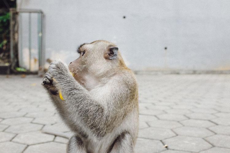 Close-up of monkey eating banana outdoors