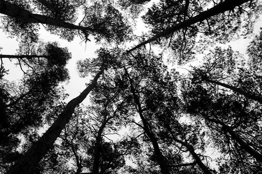 Trees Tree Landscape Land Photograpy Forest Haunt Haunted Dark Night Darken Picture Pictureoftheday Photos Photopftheday Winterend Spring Springiscoming Earth World Wood Byme Instashit Instapic Instagood weisserrauch germany niedersachsen