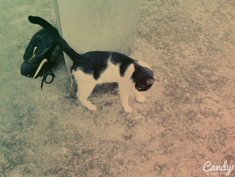 Mycat❤ Looking To The Other Side Mycatisthebest EyeEm Nature Lover Cutecat Blackandwhitecat Ilovemycat Cute Pets Cute Cats Cute Cute Animals Cuteeee♥♡♥ Eyeembangladesh Bangladesh Mirpur