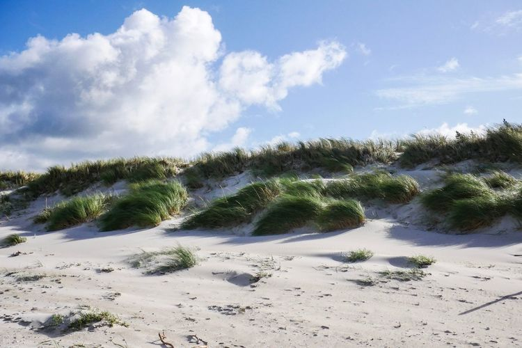 Sky Cloud - Sky Land Beauty In Nature Nature Beach Day Sand Plant Scenics - Nature No People Tranquil Scene Water Tranquility Tree Non-urban Scene Sunlight Outdoors Marram Grass Growth
