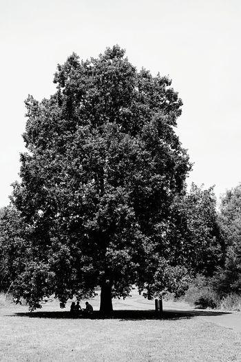 timeless // Ruffey Lake Park Tree Summer Australia Day Winter?