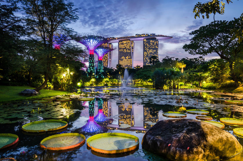 Garden by the Bay, Singapore- May 13, 2017: Beautiful dusk at Garden by the Bay. Calm water at the Lily Pond create perfect reflection for the man made structure, Super Tree and MBS Hotel. Blue Hour Cityscape Marina Bay Sands Singapore SuperTree Architecture Dusk Garden By The Bay Illuminated Lily Pond Marina Bay Nature Night No People Outdoors Reflection Sky Tourism Tree Water