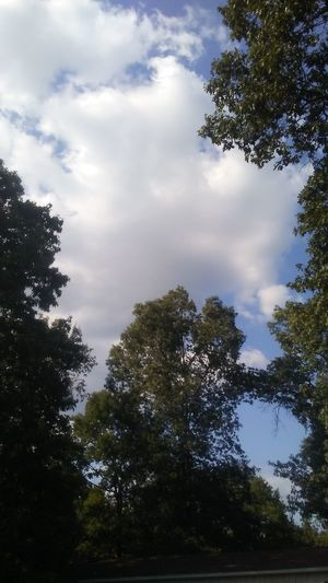 Tree Forest Cloud - Sky Nature Sky Low Angle View Pinaceae No People Tranquility Outdoors Day Tree Area Beauty In Nature