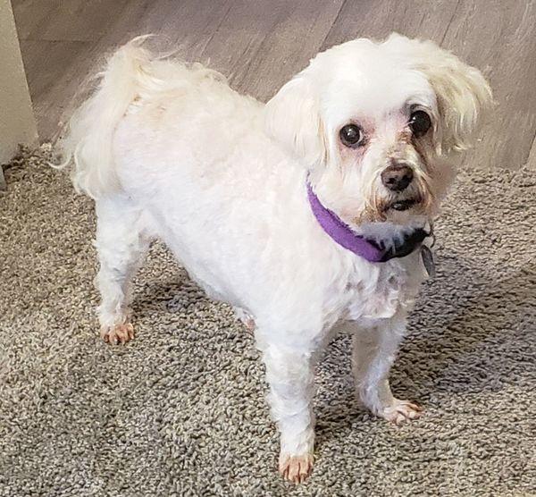 lil ole Maltese lady Texas EyeEmNewHere Dog Animal #EyeEmNewHere Pets Pets Of Eyeem Texas EyeEmNewHere No People Dog Animal #EyeEmNewHere