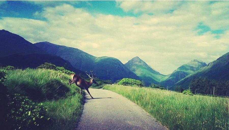 One Animal Mountain Road Animal Themes Animal Adventure Full Length Scenics Nature Landscape Travel Destinations Mountain RangeMammal