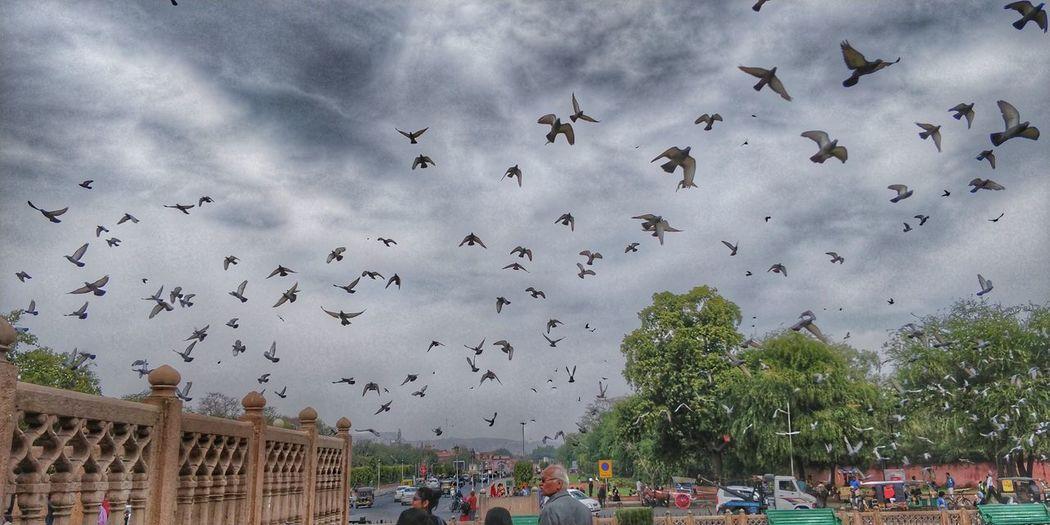 Bird Tree Flock
