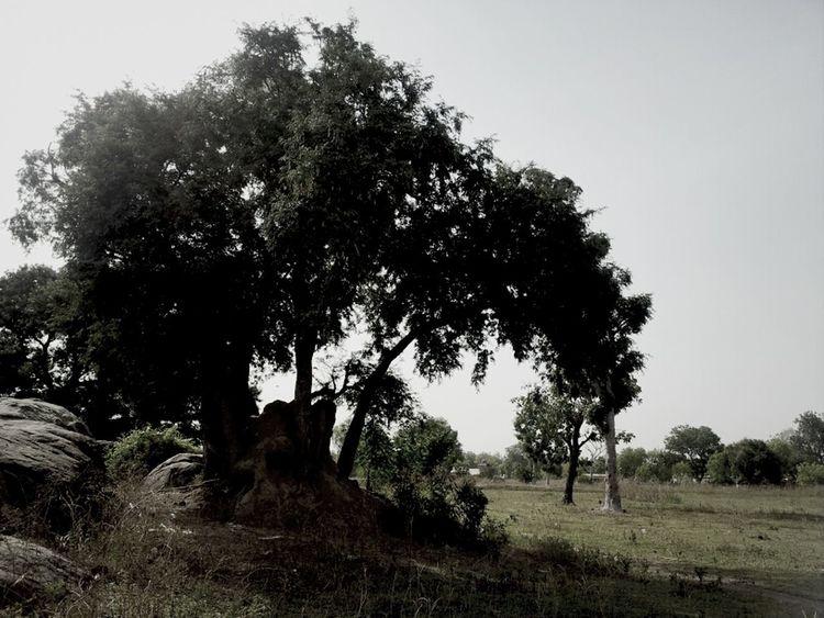 Chrismas Tree Where It Shud Be TreePorn