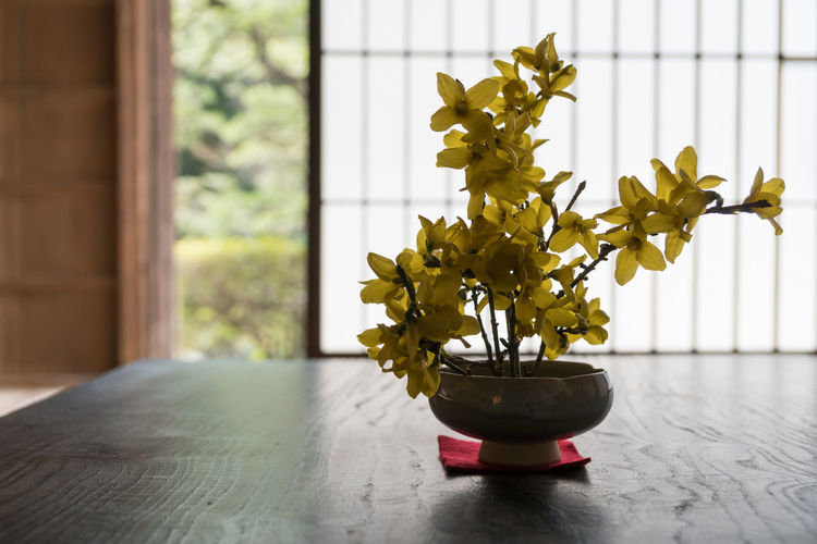 Japan Japan Photography Close-up Day Flower Focus On Foreground Growth Home Interior Indoors  Nature No People Plant Potted Plant Table Window