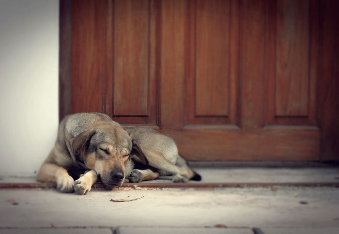 the dog feel lonely Animal Comfortable Dog Door Feel Lonely Front View Home House Lonely Mammal Pet Relaxation Sleeping