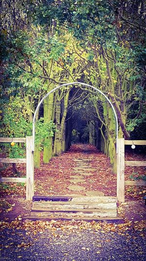 Arch The Way Forward Day No People Outdoors Shadow Nature Grass Beauty In Nature Tranquility Nature Rural Life Visual_world Nature_collection Tree Built Structure Trees Nature On Your Doorstep Green Colours Autumn Collection Simple Pleasure Natural Pattern Tree_collection  Minimal Scenics