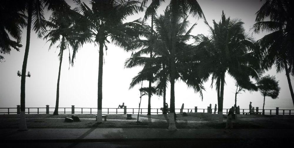 Blackandwhite Palm Trees Urban Nature Streetphoto_bw