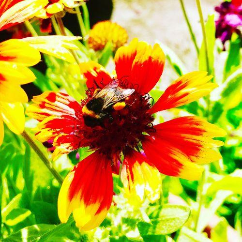 Bee 🐝 Flower