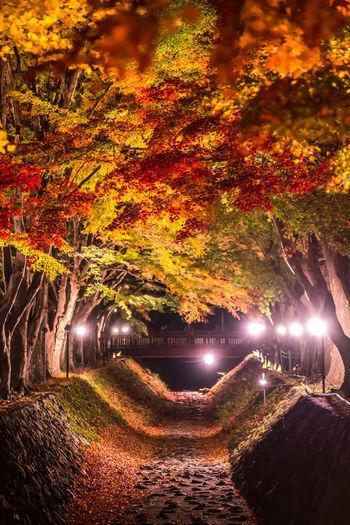 Illuminated footpath amidst trees at park during autumn