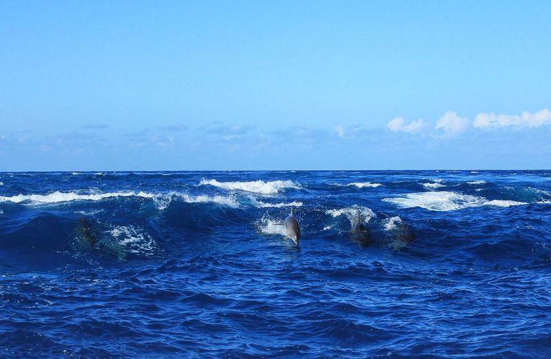 Seaside Dolphins Tahiti French Polynesia