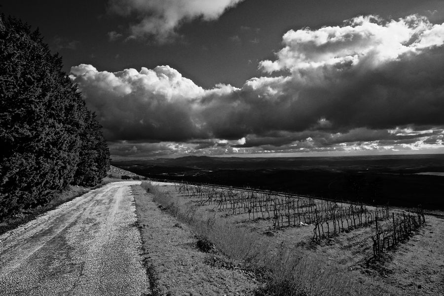 Erice Italia VINYARDS OUT OF SEASON Vista Panorámica Agriculture Beauty In Nature Cloud - Sky Day Erice Field Landscape Nature No People Outdoors Road Scenics Sky Tranquil Scene Tranquility Vigna Vinyard Vinyard Landscape Vinyards Vinyardsunset Vinyardview Vista Da Erice
