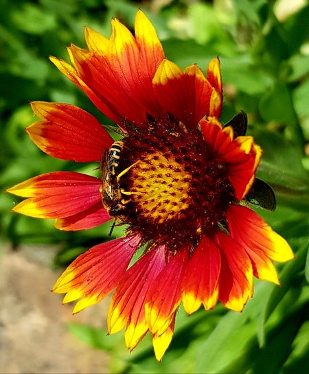 summer Flower Head Flower Petal Yellow Insect Close-up Animal Themes Plant Coneflower Pollen Symbiotic Relationship