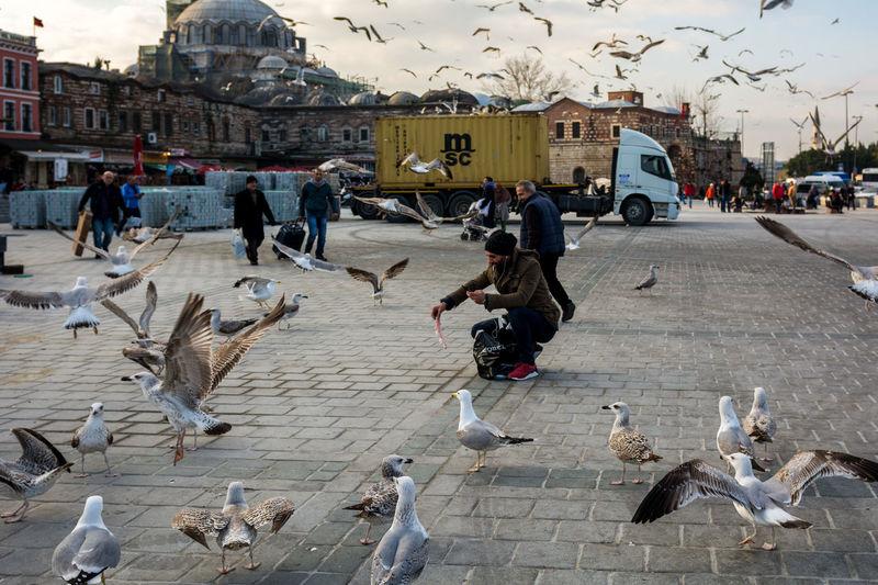 Seagulls in Eminönü Birds Eminönü Eminönü/ İstanbul Eminönüyenicamii Europe Istanbul Ottoman Empire Seagull Turkey Turkish Türkei Türkiye The Photojournalist - 2017 EyeEm Awards