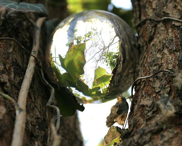 Tree Nature Growth Outdoors Tree Trunk Close-up Beauty In Nature Nature Simple Beauty Summer Crystalclear Crystal Ball Photography Crystal Crystal Ball Ivy Ivy Leaves Ivy Leaf Tree Trunk Bark Barks Of A Tree Forest Forestwalk With Nature