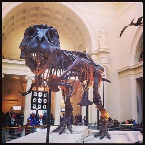 T-Rex. T-rex T-rex Bones Chicago Chicago Museum Chicagomuseums TheFieldMuseum