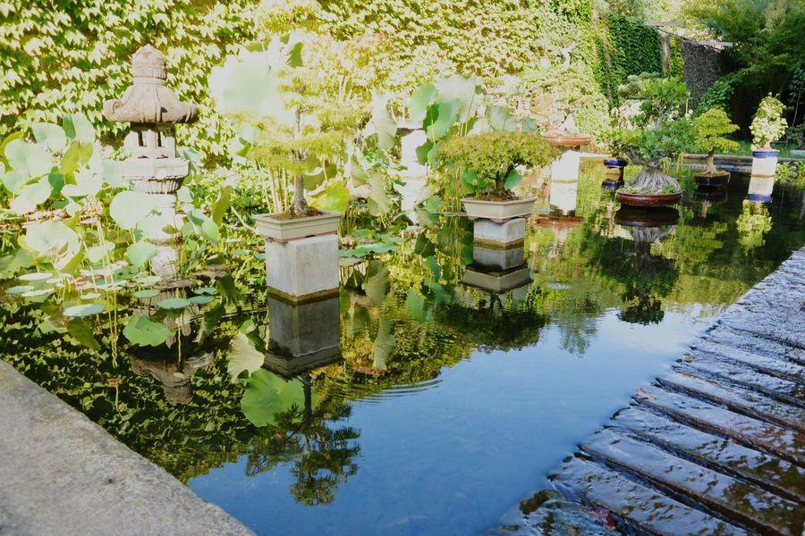 Miroir d'eau Asian Garden Zen La Bambouseraie Anduze Holiday Memories South France Capture The Moment The Magic Mission