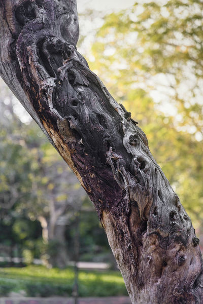 Details Tree Tree Trunk Focus On Foreground Outdoors Day Wood - Material Nature Human Hand Branch Close-up Human Body Part One Person People