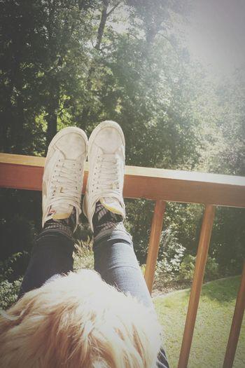 Dog Autmn Sun Cuddlebuddy