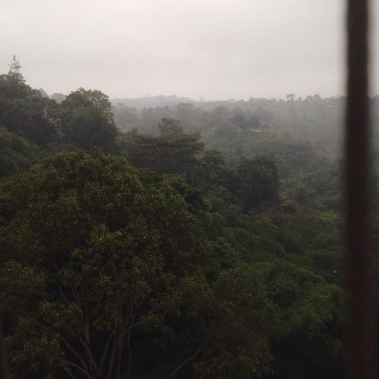 Morning you miss you Taking Photos Nature Greenery Scenery Mountains Morning Dew Bandung Holiday