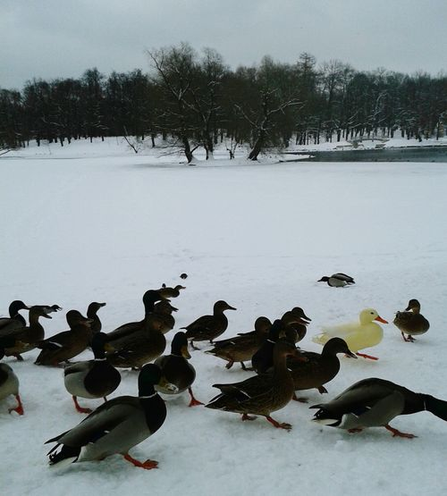 Stand Out From The Crowd Gatchina Russia RePicture Travel
