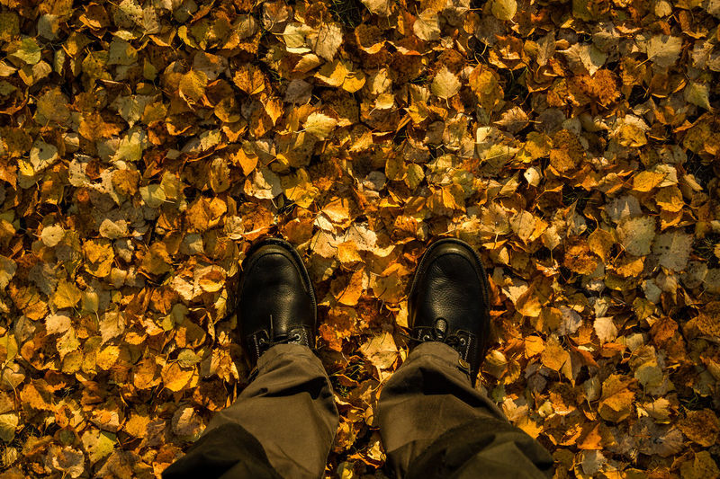 Low section of man wearing shoes on autumn leaves