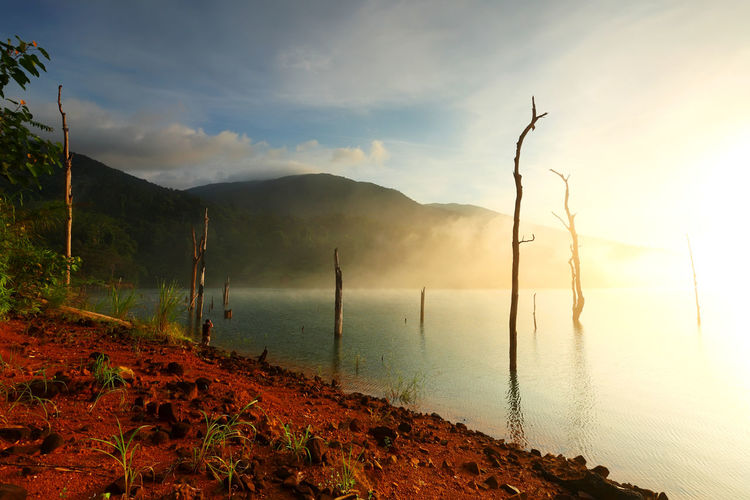 Beautiful landscape with fog and dead trees on a water dam in the morning light of Thailand Mountain Beauty In Nature Sky Scenics - Nature Water Tranquil Scene Tranquility Cloud - Sky No People Nature Non-urban Scene Fog Land Idyllic Outdoors Environment Plant Lake Mountain Range Pollution Sunrise