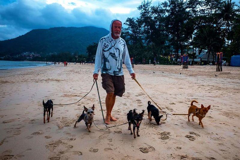 Dogs Lover Dog Pets Beach Patong Beach Patong Phuket Phuket,Thailand Small Dogs  Walk The Dog
