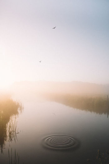 This morning the sunrise was incredible! Love the foggy mornings! How was your day?? 🔥 | Water Sky Flying Nature Tranquility No People Landscape Backgrounds Foggy Morning Agriculture Into The Light EyeEmNewHere Live For The Story Wanderlust Calmness Travel Destinations Wandering Full Length Sunrise Sunbeam Fog Netherlands Sunbeams Bird Water Reflections Fresh On Market 2017