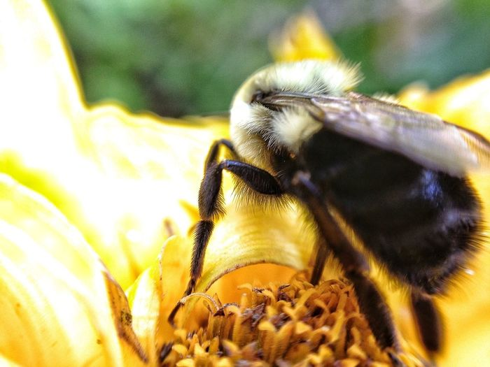 Bee_love EyeEm Nature Lover Macro_collection Macro Nature