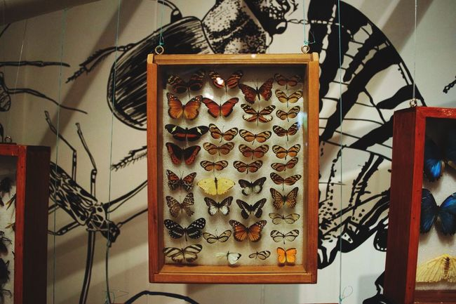 Butterfly Butterfly Collection Check This Out Colorsplash Animals Animal Photography Museum Capture The Moment Colombia Tunja UPTC Nature Eyemphotography