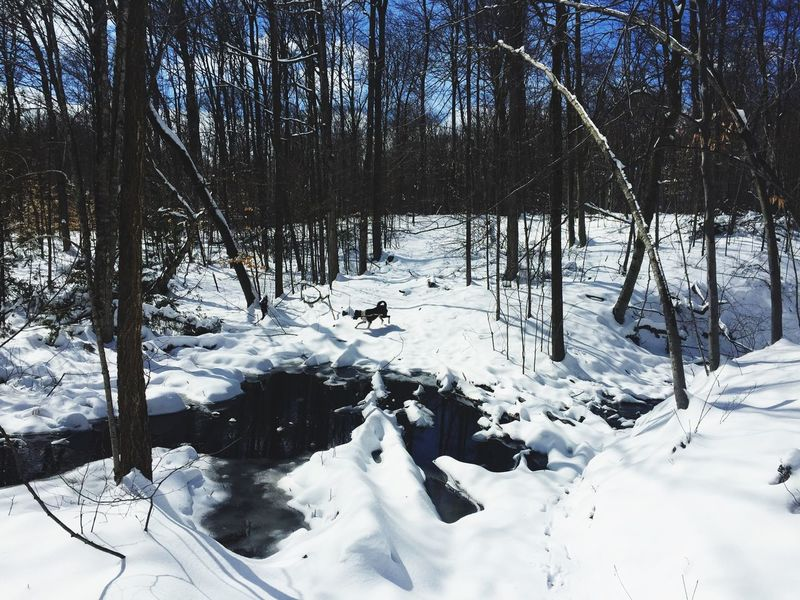 Congrats to myself for not falling in this super icy stream!! Clumsy  I Fall A Lot Especially In The Forest