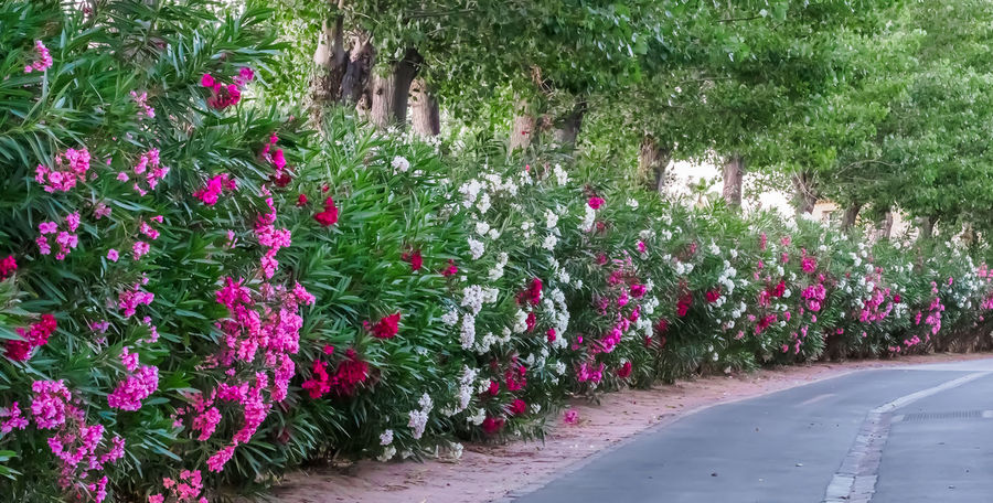 Grimaud Port Grimaud Beauty In Nature Day Flower Flower Head Flowerbed Fragility Freshness Green Color Growth Nature No People Outdoors Pink Color Plant
