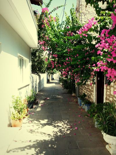 Bodrum Street Strada Vía Road Flower Flowers Flowers, Nature And Beauty Fiori Alberi Trees Percorso Angolinascosti Hidden Places Hidden Beauty Sunny Day No People Calm Calming Views Summer Plant Outdoors Nature