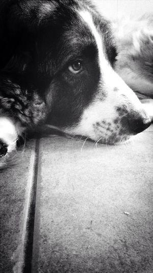 Picoftheday MyLifeMyWorldMyEverything Lovemydog Love Love ♥ Myuniverse Mydog