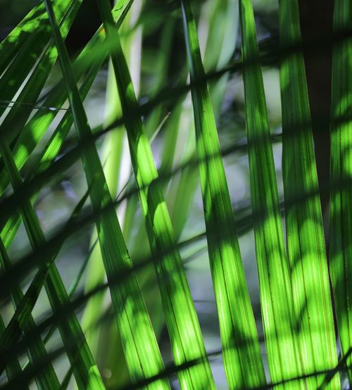 The fronds of a Nikau Palm, with filtered sunlight streaming through from the tree canopy above giving an abstract, contrasting form to the tones of filtered green from the highlighted fronds. Abstract Abstract In Nature Abstract Nature Beauty In Nature Contrasting Colors Filtered Light Formed Lines Green Colour Natures Beauty Nikau Palm Palm Fronds Sunlight And Shadow