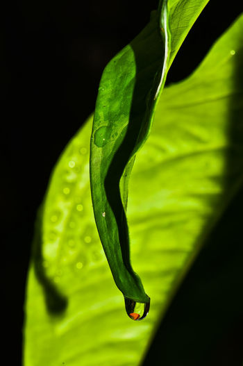 Close-up Water Drop Leaf Green Color Black No People Fragility RainDrop Selective Focus Plant Part