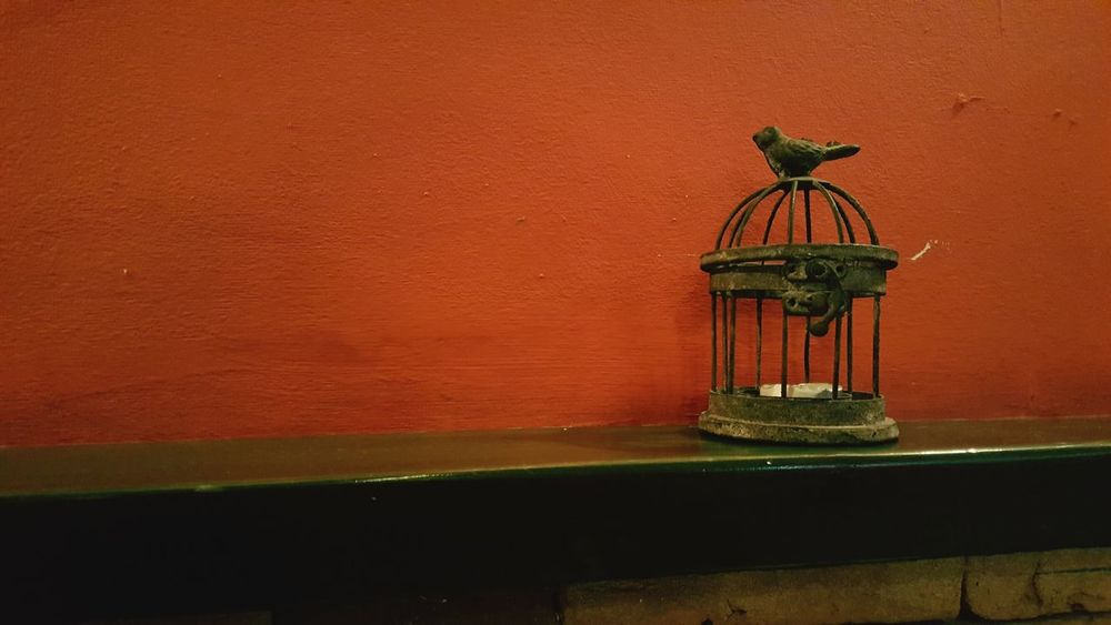 Bird Vintage Peace Candle FirstEyeEmPic FirstPhoto  FirstPhoto  First Eyeem Photo Candlelight