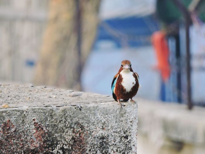 Portrait Of Bird Perching On Retaining Wall