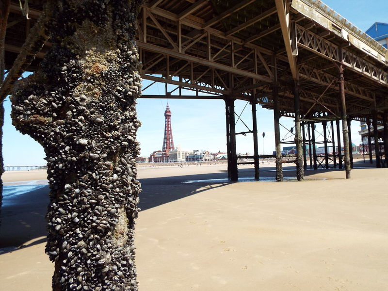 Blackpool Tower framed by the framework of Blackpool's Central Pier Tourist Attraction  Tourism Summer Summertime Summer2016 The Essence Of Summer Blackpool Seafront Blackpool Tower Pier Blackpool Central Pier Central Pier Sand Blackpool Beach Blue Sky at Blackpool United Kingdom