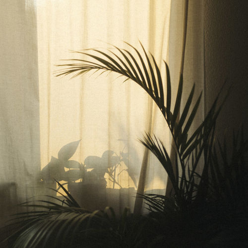 Close-up of silhouette plant against window at home