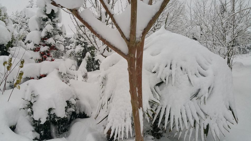 kar yağıyor... EyeEm Nature Lover Adapazarı My Home Town! Turkey💕