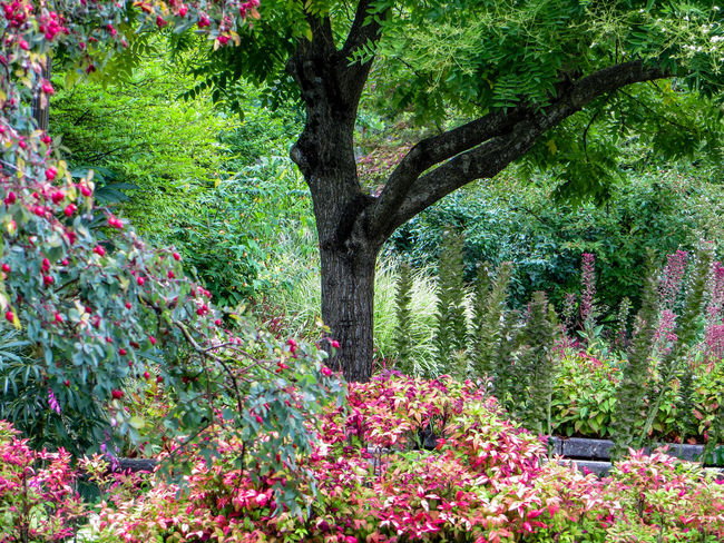 Shade Tree in a Garden Quiet Flowerbed Flowering Plant Formal Garden Garden Green Color Greenery Lush Foliage Multi Colored Nature No People Ornamental Garden Outdoors Park Park - Man Made Space Tree Tree Trunk