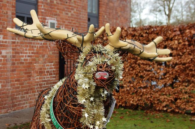 Christmas Reindeer Outdoors Day Building Exterior