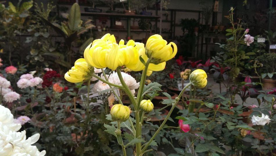 Yellow Flower Photography Flower Garden EyeEm Best Shots - Flowers